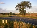 Tree Junction - geograph.org.uk - 54601.jpg