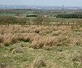 Tree planting in rough moorland - geograph.org.uk - 164426.jpg