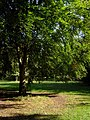 Trees alongside Green Path, Southampton Common - geograph.org.uk - 991982.jpg