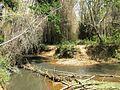 Trekking @ Wayanad wildlife Sanctuary - panoramio (11).jpg