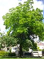 Troyes - jardin du Beffroi (02).jpg