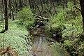 Tryon Creek at Obie's Bridge.jpg