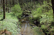 A stream no more than 10 feet (3.0 m) wide meanders through a second-growth forest.