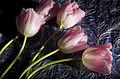 Tulip Series (3311775133).jpg