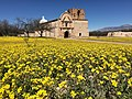 Tumacacori mission church with flowers in foreground (4352d2bf-e0ee-4510-901b-9d5ee21c6a23).JPG