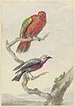 Twee vogels, waaronder een rood-groene papegaai.jpeg