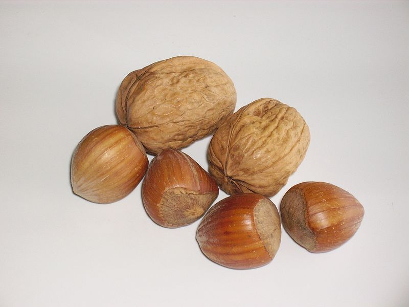 File:Two walnuts and four hazelnuts.jpg