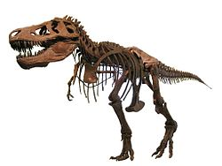 Tyrannosaurus AMNH 5027 (white background).jpg