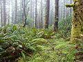 US Spruce RR Spur 5 cut - Siuslaw NF Oregon.jpg