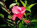Una Flor Despued de la LLuvia - panoramio.jpg
