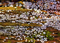 Unidentified mushrooms on dead-wood Lamiot (Touvérac, France) 1.JPG