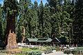 United States - California - Sequoia National Park - 09.jpg