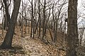 Upper Bluff Trail - Frontenac State Park, Minnesota (33388427355).jpg