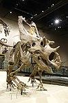Utahceratops gettyi 1 salt lake city.jpg