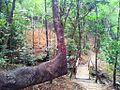 Vallee Ferney - indigenous reforestation plantings.jpg