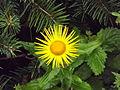 Valley of Flowers National Park 07.JPG