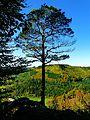 Vertigo Free - panoramio.jpg