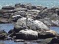 Viña del Mar, Chile3.jpg