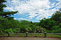 View Bussey Hill Arnold Arboretum.jpg