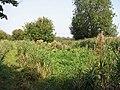 View across an overgrown Muck Fleet - geograph.org.uk - 1496467.jpg