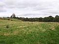 View across meadow to west end of Park Wood - geograph.org.uk - 1017984.jpg