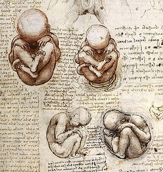 Science and inventions of Leonardo da Vinci - Studies of a fœtus from Leonardo's journals