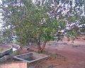 Vilangan Kunnu Image125.jpg