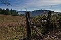 Vineyards of Maple Creek.jpg
