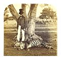 WELD 1862 in India pg182 (041 The Dead Tiger).jpg