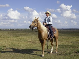 Horse trainer person training horses for racing, riding, show or work