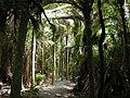 Walkway in Nikau Reserve, Paraparaumu.jpg