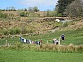 Washing line and kennels - geograph.org.uk - 796801.jpg