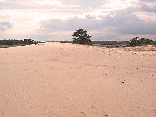 Wekeromse Zand stuifzand 3