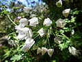White flowers floresta.jpg