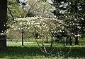 Wiese unter Baeumen Botanischer-Garten Muenchen-4.jpg