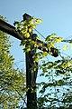 Wiesenbach - Kreuz bei Kappele.JPG