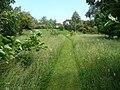 Wild flower garden - geograph.org.uk - 855625.jpg