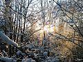 Winter auf dem Hohen Meißner.JPG