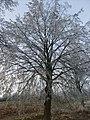 Winterimpressionen-rauhreif-2008-006.jpg
