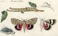 Winterthurer Bibliotheken Ms 8° 154-ordo 24-003 J R Schellenberg Falter und Raupen Noctua Ordo 24 Larvae serpentinae Phalaenae Nocturnae geometriformes.tif