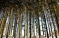 Winterwald in der Eifel.jpg