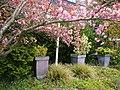 Wiosenne widoki - panoramio.jpg