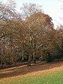Witten Stadtpark Blutbuche 2.3.12.jpg