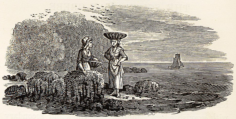 Women Collecting Shellfish tail-piece in Bewick British Birds 1804