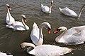 Woodbridge Suffolk (3519352764).jpg