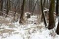 Zakole Wawerskie w Warszawie, wykroty, las olchowy zimą 001.jpg
