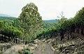 Zarza de Granadilla 1978 03.jpg