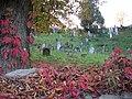 Zidovský hřbitov.jpg