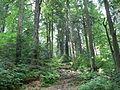 Zielony szlak - panoramio.jpg