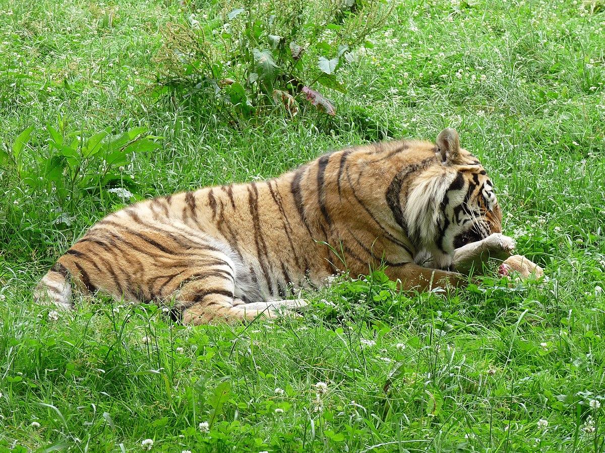 Tabor Zoo - Wikipedia